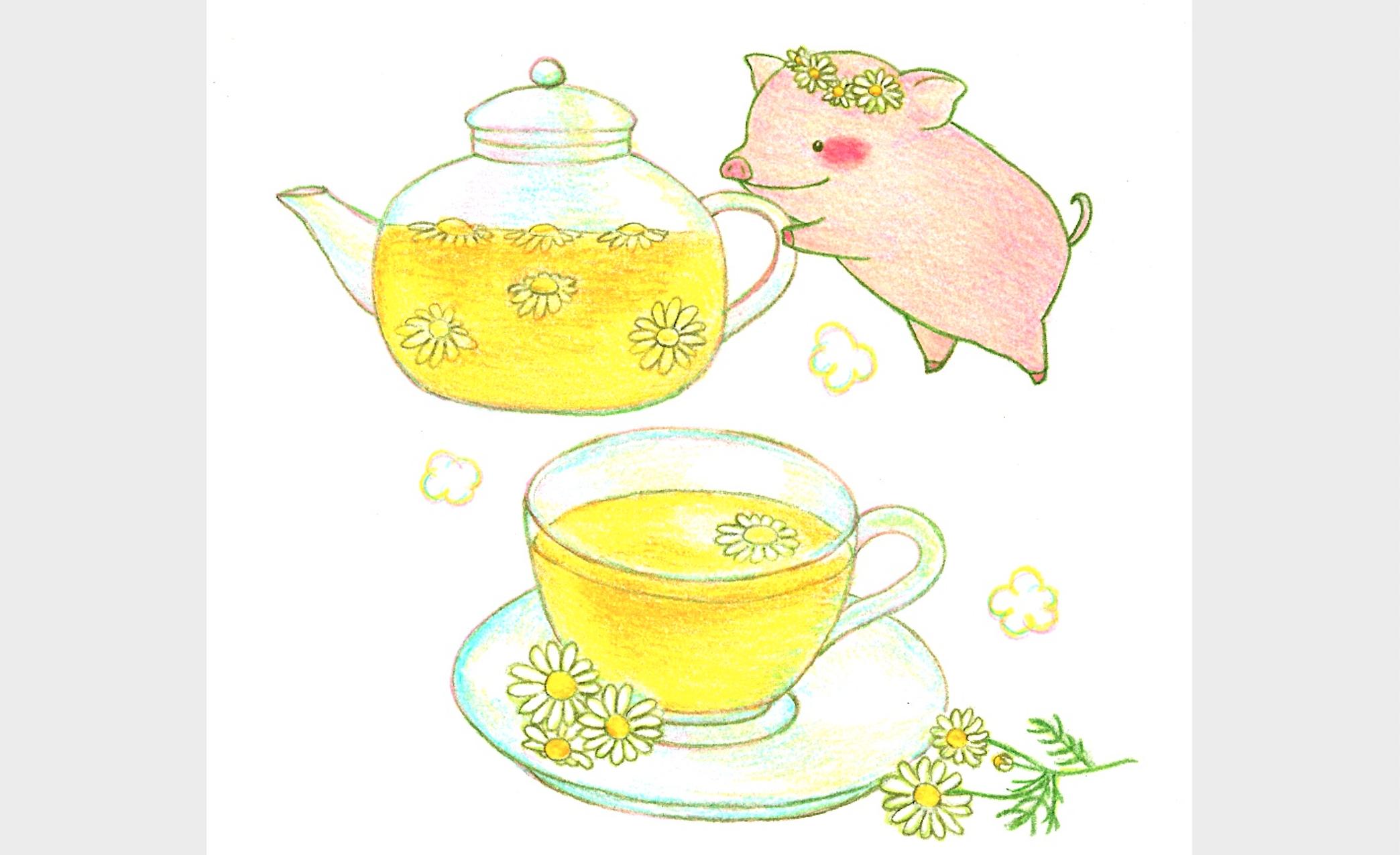 皆川竜二のマイクロブタと触れあえるカフェ「mipig café」に行きたい!